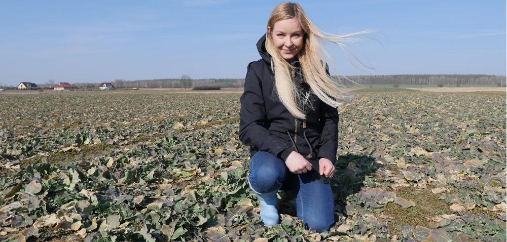 Nowy herbicyd wrzepaku – ocena wiosenna [WIDEO]