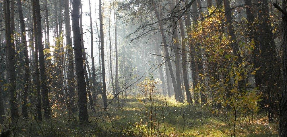 Posadź las izarabiaj [AKTUALNOŚCI]