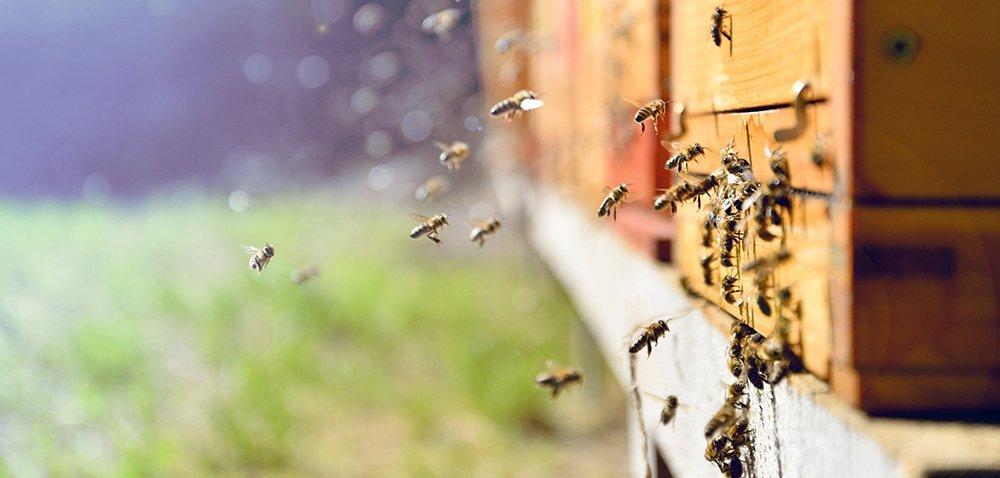Hotele dla pszczół [AKTUALNOŚCI]