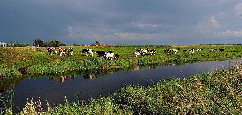 Na zdrowie każdej krowie! inie tylko…