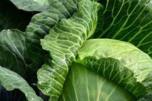 Ceny warzyw idą na rekord