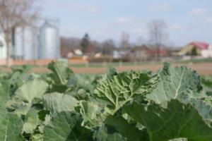 Zwalczanie chwastów wrzepaku wiosną – nowy sposób [WIDEO]