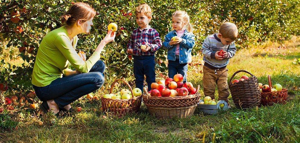Sprzedaż owoców iwarzyw może być łatwiejsza [AKTUALNOŚCI]