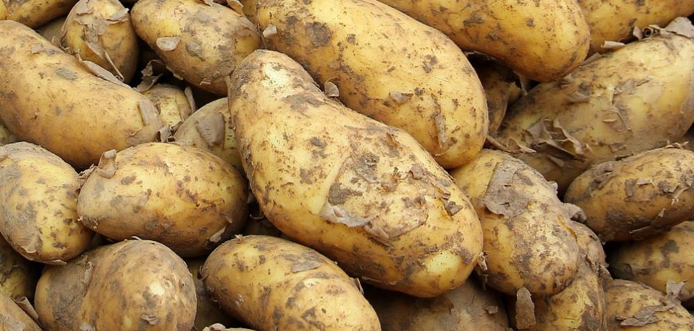 Wyższe ceny młodych ziemniaków