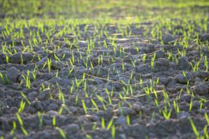 Rewolucyjne zaprawianie nasion – jest nowa substancja!