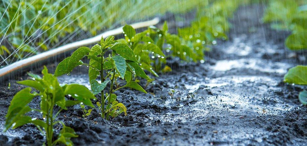 Zużycie wody wrolnictwie zmalało [AKTUALNOŚCI]