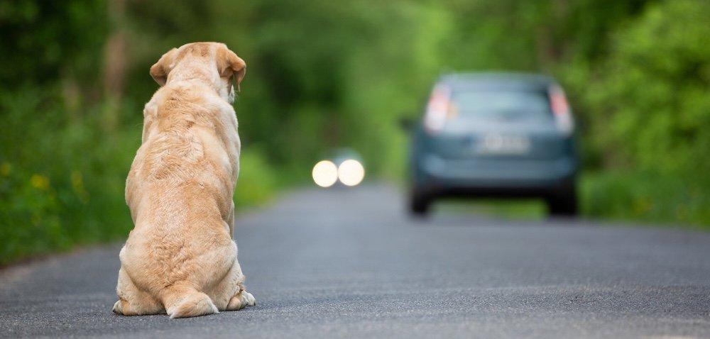 Co grozi za porzucanie zwierząt? Ekspertka ostrzega okarach!