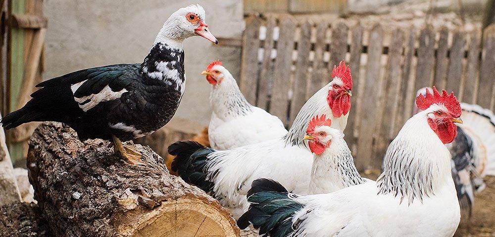 Ptasia grypa – wsparcie finansowe