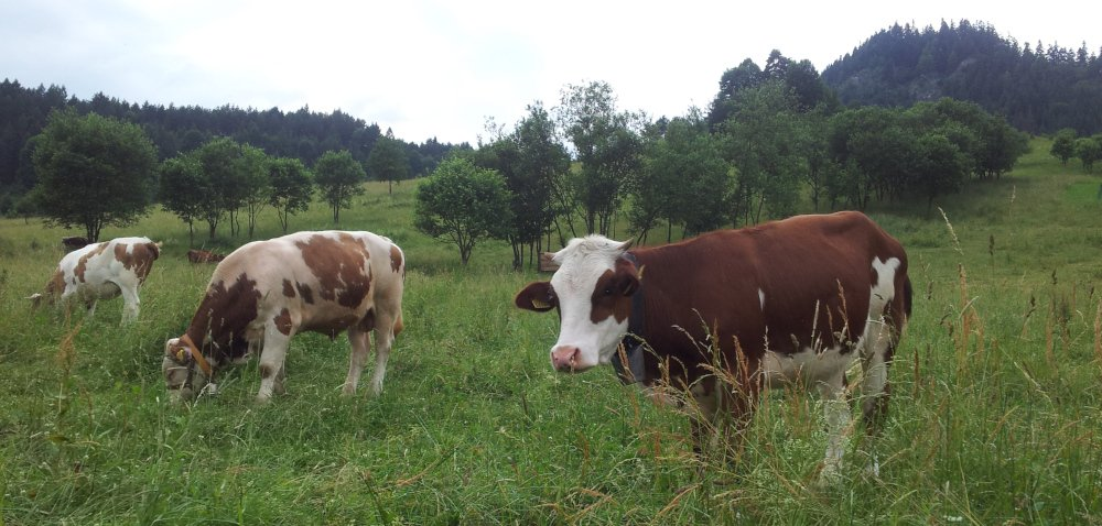 Rolnictwo wgórach: propozycje wsparcia – część 1.