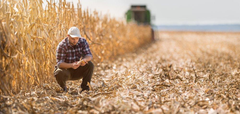 Ubezpieczenia upraw są coraz popularniejsze? [AKTUALNOŚCI]