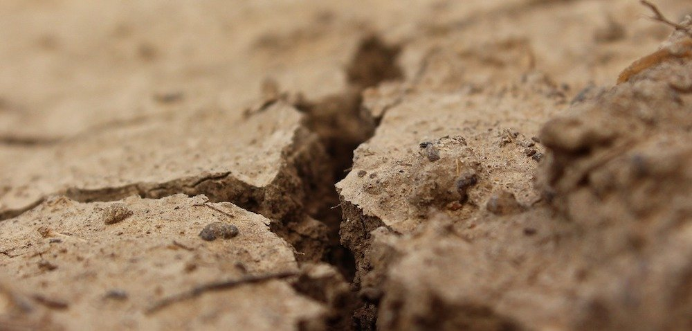 Odszkodowania po suszy [AKTUALNOŚCI]