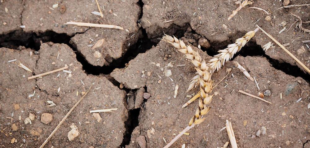 Straty suszowe: pomoże własny rzeczoznawca? [AKTUALNOŚCI]