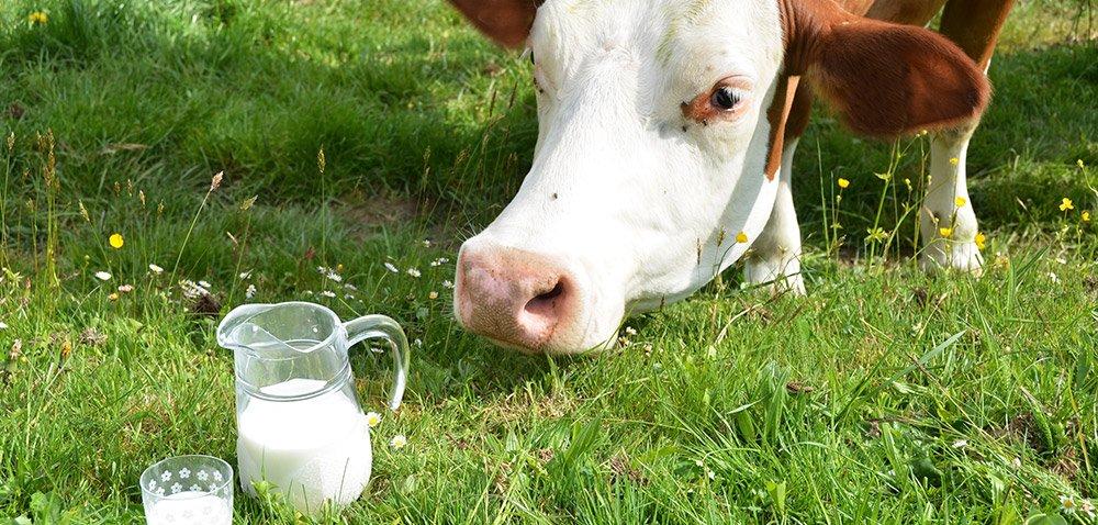 Żwacz źródłem jakości mleka krów oraz ich zdrowia. Część I