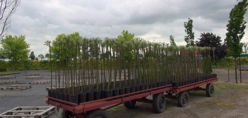 Bezpieczne gospodarstwo – szkółka roślin