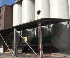 Ceny skupu zbóż irzepaku niezadowalające [WIDEO]