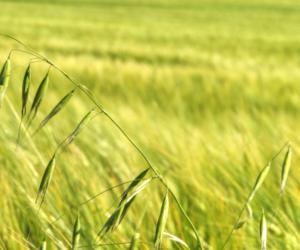 Odporność chwastów na herbicydy – jak sobie znią radzić?