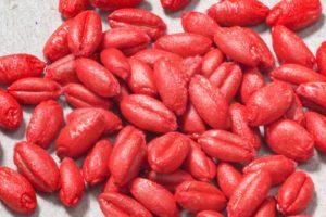 Zaprawianie zbóż ozimych