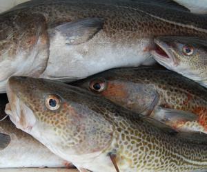 Rośnie eksport ryb