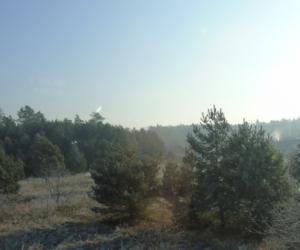 Inwestuj wodporność ekosystemów leśnych – są pieniądze!