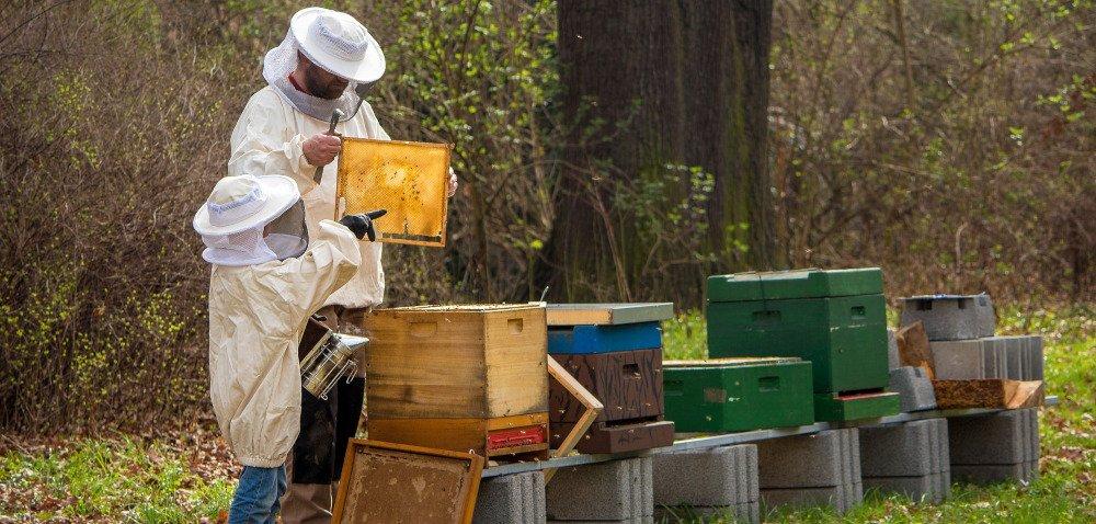 Na Podkarpaciu powstanie pszczeli bank