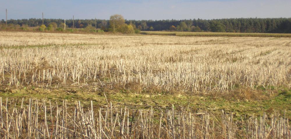 Pomoc Komisji Europejskiej poszkodowanym rolnikom