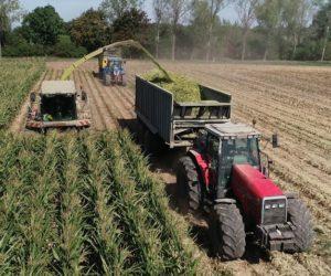 Jaka kukurydza na kiszonkę sprawdziła się wtym sezonie? [WIDEO]