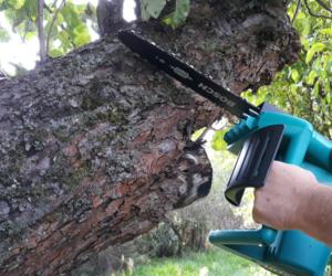 Wycinka drzew na własnej posesji – nieznajomość przepisów szkodzi!