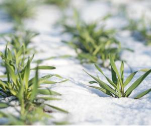 Azot na start – kiedy wysiać nawozy azotowe?