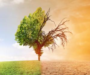 Zmiany klimatu – Syngenta da 2 miliardy dolarów na innowacje!