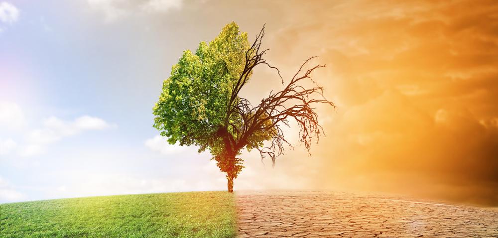 Zmiany klimatu – Syngenta da 2miliardy dolarów na innowacje!