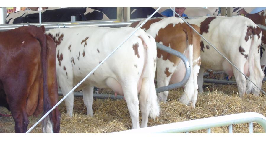 eWniosek – deklaracja wzakresie płatności do zwierząt