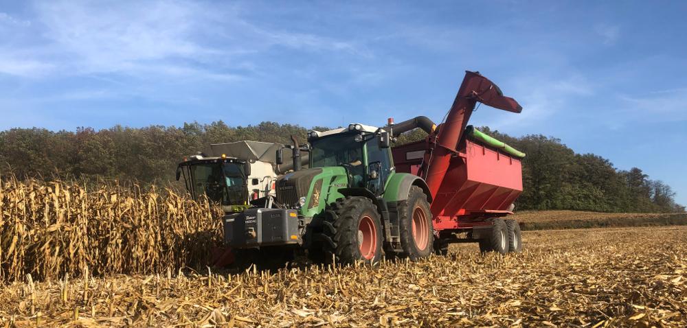 Plonowanie kukurydzy 2019. Zebraliśmy nawet 16 ton zhektara