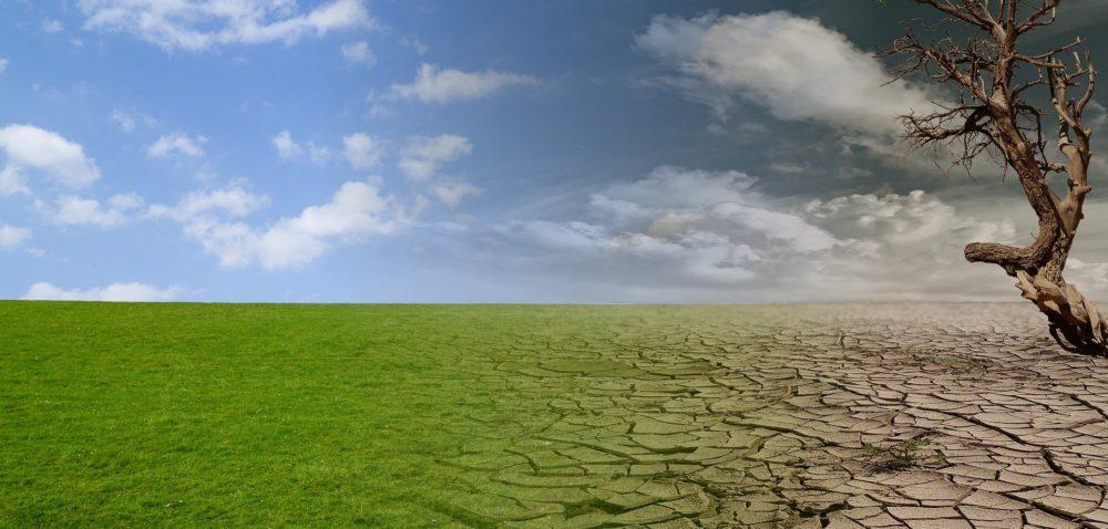 Komentarz wsprawie pomocy suszowej za 2019r. – ARiMR iMRiRW!