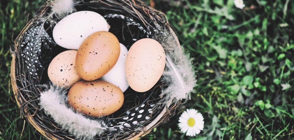 Dobre wiadomości ojajach na Wielkanoc