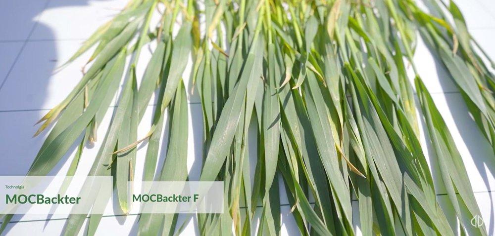 Tradycyjne metody ochrony zbóż czy technologia MOCBackter?