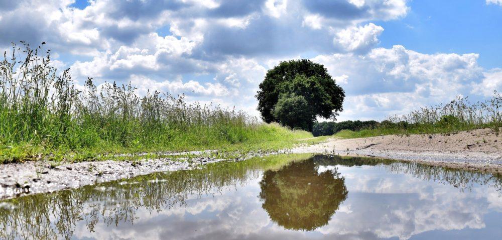 Mimo deszczu susza nadal występuje? – drugi komunikat IUNG