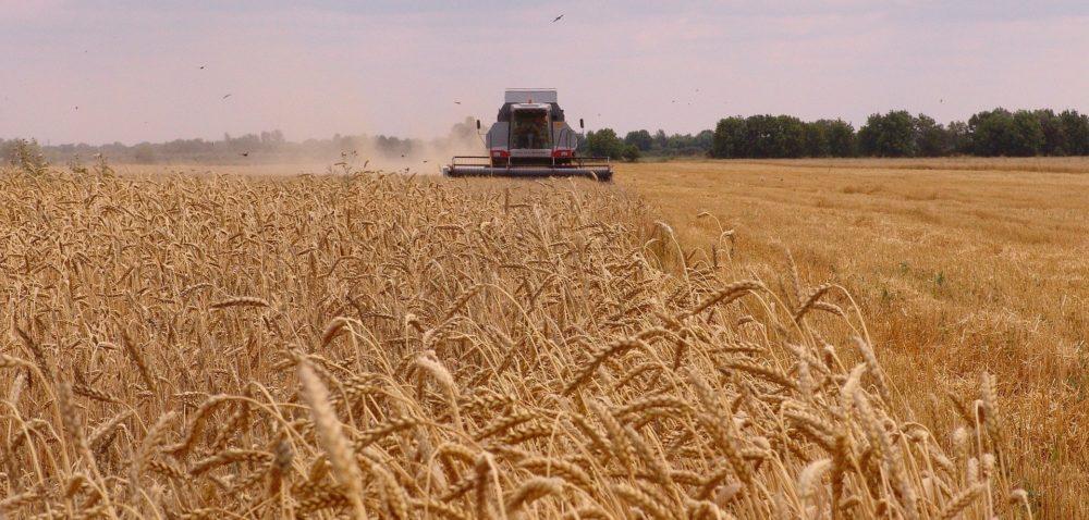 Cena skupu pszenicy 2020