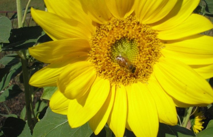Pomoc dla pszczelarzy. Miodzik wMinisterstwie Rolnictwa