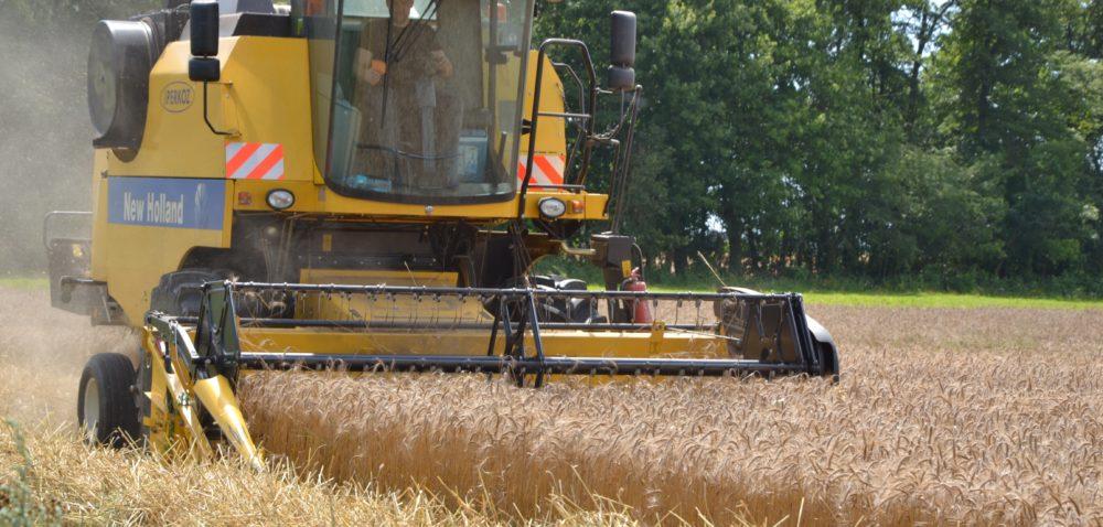 Tegoroczne plony zbóż dają powody do zadowolenia, chociaż mogły być wyższe