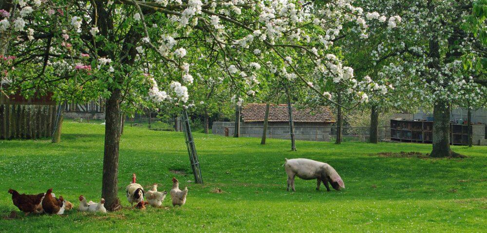 Wznowienie eksportu dla polskiej wieprzowiny idrobiu