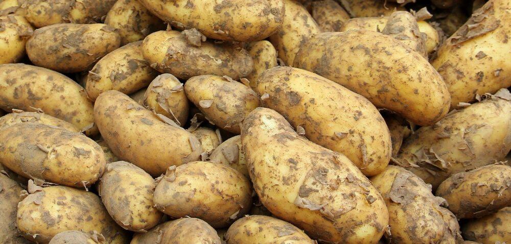 Ziemniak polski znowu na topie! – zapowiada minister rolnictwa