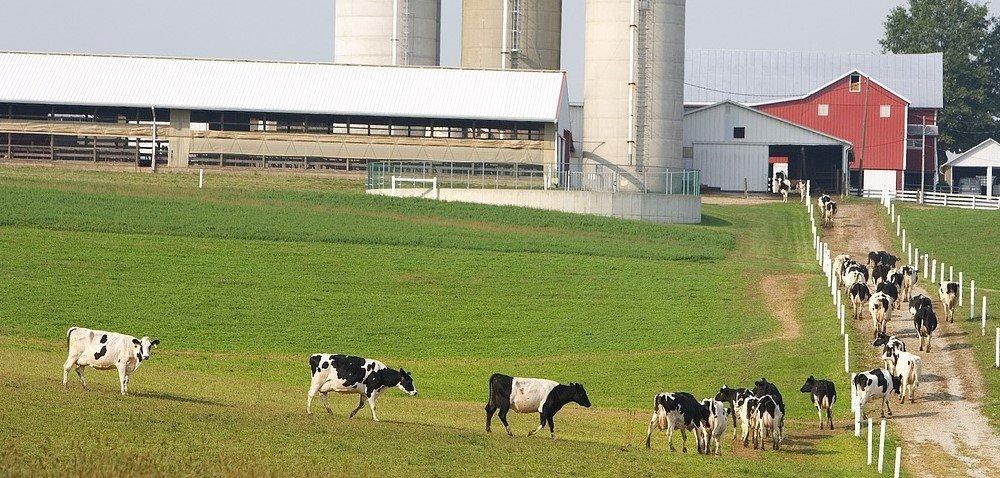 Cena mleka wskupie 2020 inotowania artykułów mleczarskich