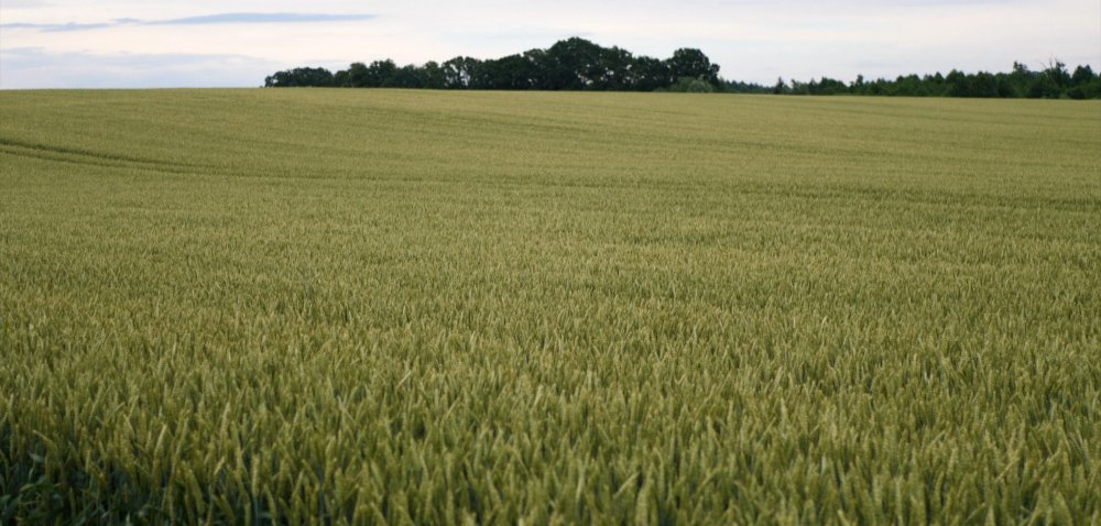 Czy wtym roku warto postawić na kwalifikowane nasiona?
