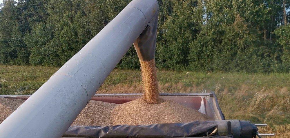Zbiory pszenicy 2020 – jak przebiegają żniwa? Sprawdzamy ceny ziarna!