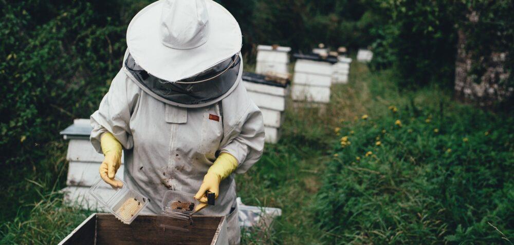 Pomoc finansowa dla pszczelarzy- co na to MRiRW iMŚ?