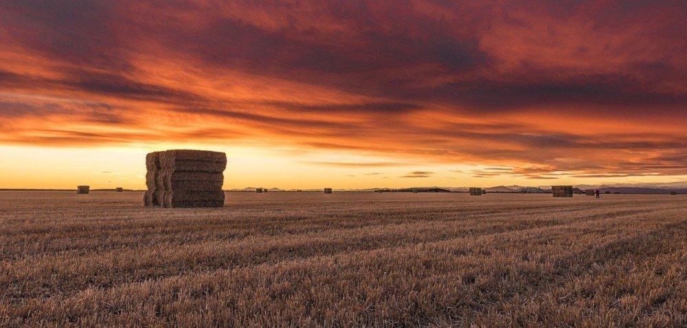Zwyżki na rynku zbóż. Aktualne ceny zbóż irzepaku