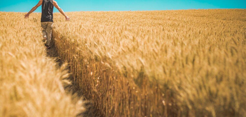Zakup użytków rolnych zdopłatą – od dzisiaj spora kasa dla młodych rolników