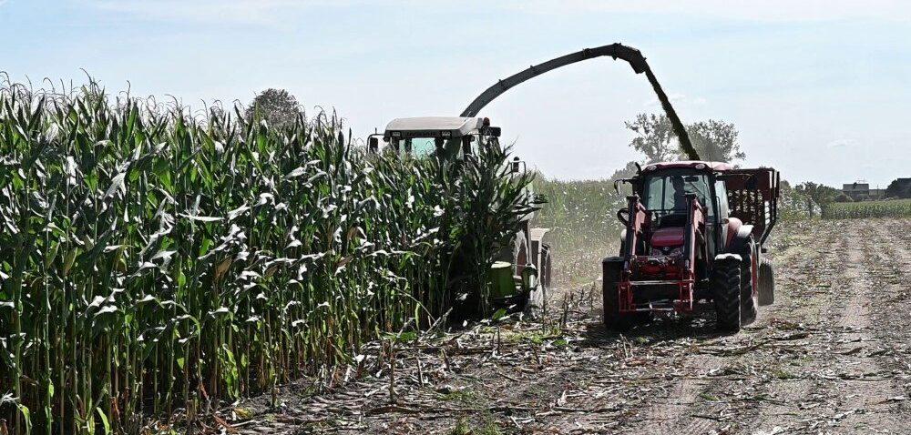 Zbiór kukurydzy na kiszonkę 2020. Zobacz nagranie!