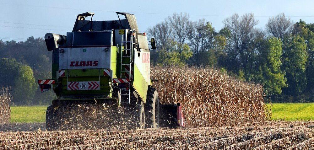 Zbiór kukurydzy na ziarno 2020. Rolnicy zaczęli kosić