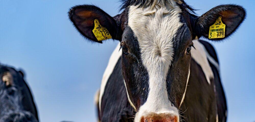 Jaka będzie sytuacja na rynku mleka? Najnowsze informacje